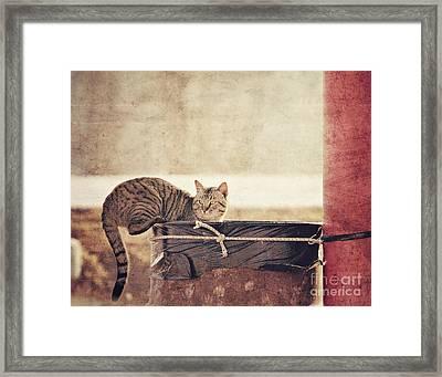 Dumpster Diver Framed Print