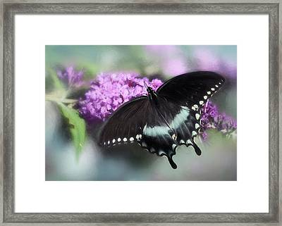 The Swallowtail Framed Print