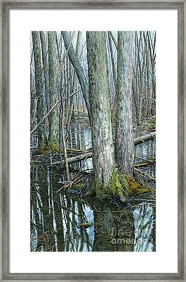 The Swamp 3 Framed Print