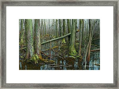 The Swamp 4 Framed Print