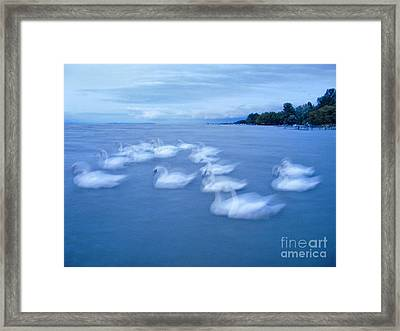 The Swans On Rippled Surface Framed Print by Odon Czintos