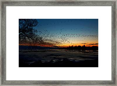 The Swarm Framed Print by Matt Molloy