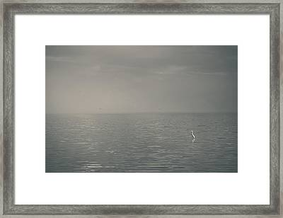 The Sweet Serenity Framed Print by Laurie Search