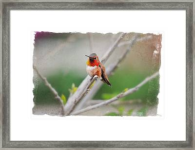 The Sweetness Of Spring Framed Print by Lynn Bauer