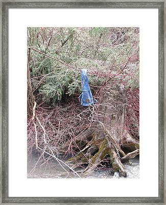 The Swim Framed Print by Shawn Hughes