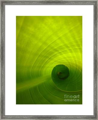 The Swirl Framed Print