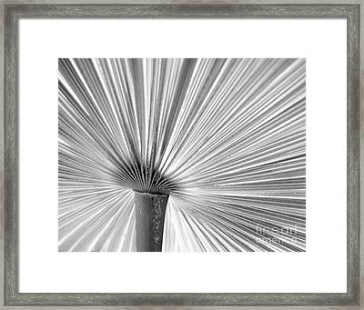The Symmetry Of Nature Framed Print by Jim Rossol