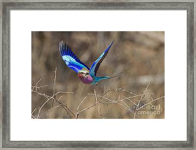 The Takeoff Framed Print by Ashley Vincent