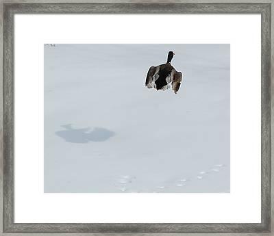 The Takeoff Framed Print by Mim White