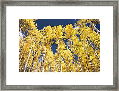 The Tall Ones Framed Print by The Forests Edge Photography - Diane Sandoval