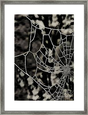 The Tangled Web Framed Print by Sheila Laurens