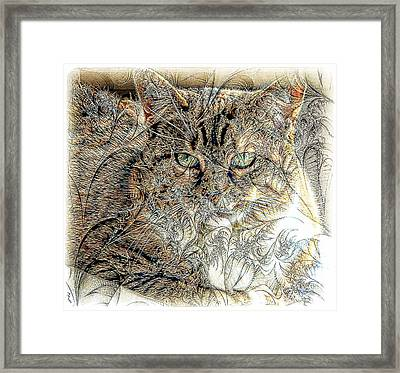 The Tapestry Cat Framed Print by Kathleen Struckle