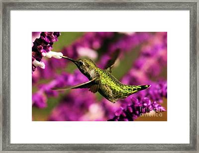 The Taste Of Purple Framed Print