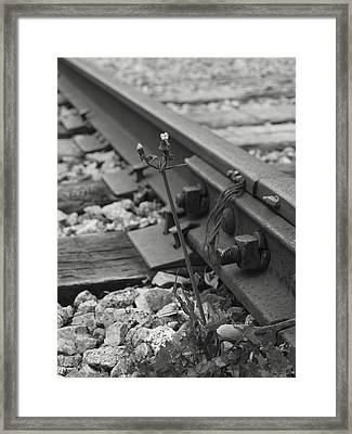 The Tenacity Of Nature Greyscale Framed Print by MM Anderson