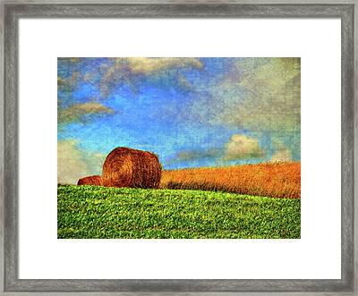 The Textures Of Autumn Framed Print by Steve Harrington