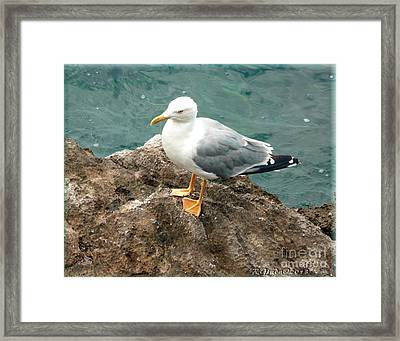 The Thinker - Seagull Photography By Giada Rossi Framed Print by Giada Rossi