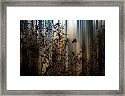The Thorn Birds Framed Print by Marek Czaja