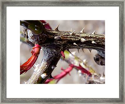 The Thorns Of Life Framed Print by Andrea Anderegg