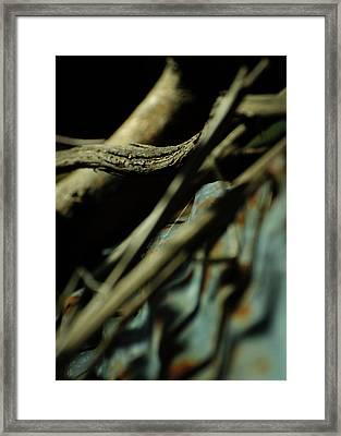 The Thread Framed Print
