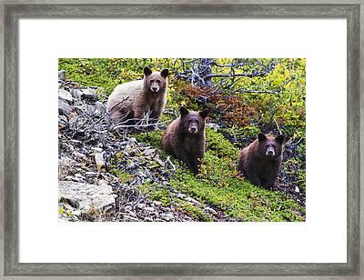 The Three Amigos Framed Print by Mark Kiver