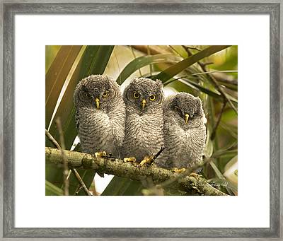 The Three Amigos Framed Print