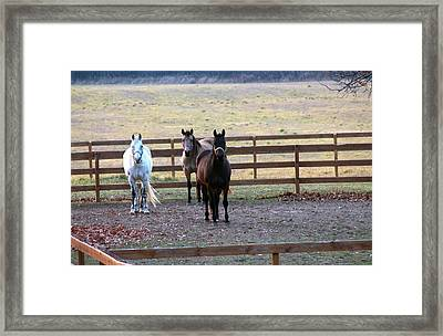 The Three Amigos Framed Print by Rhonda Humphreys