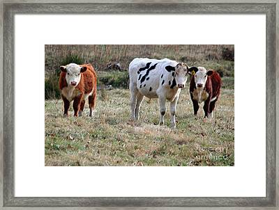 The Three Amigos In Pastel Framed Print by Suzanne Gaff