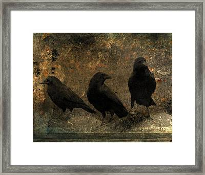 The Three Black Crows Framed Print