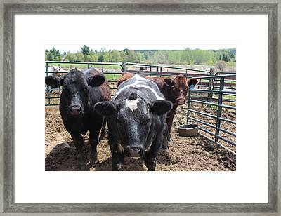 The Three Musketeers Framed Print by Tiffany Erdman