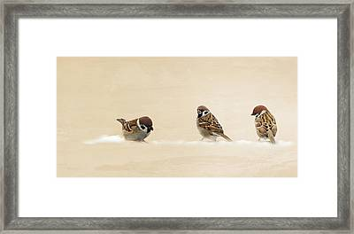 The Three Sparrows Framed Print