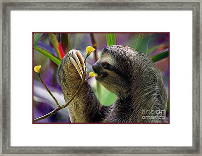 The Three-toed Sloth Framed Print by Gary Keesler