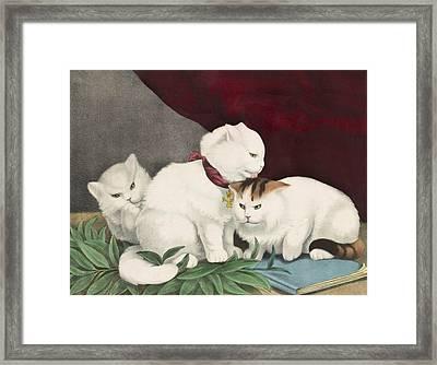 The Three White Kittens Circa 1856 Framed Print