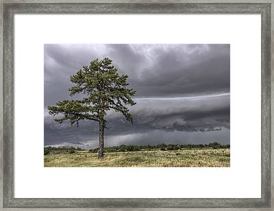 The Thunder Rolls - Storm - Pine Tree Framed Print by Jason Politte
