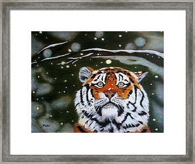 The Tiger In Winter Framed Print
