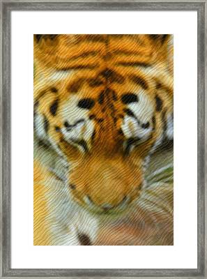The Tiger Framed Print by Tommytechno Sweden