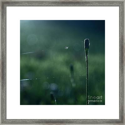 The Tightrope Walker  Framed Print by Aimelle
