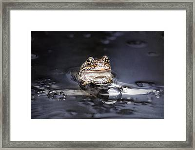The Toad Framed Print by Heike Hultsch