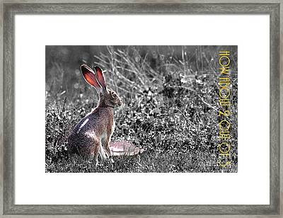 The Tortoise And The Hare How About Two Out Of Three 40d12379 Black And White Framed Print by Wingsdomain Art and Photography