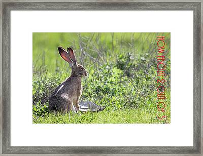 The Tortoise And The Hare How About Two Out Of Three 40d12379 Framed Print by Wingsdomain Art and Photography