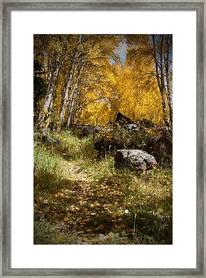 The Trail In Gold  Framed Print by Meredith Mazutis