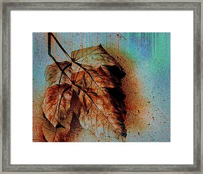 The Transience Of All Things Framed Print