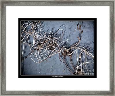 The Trapped Weed Framed Print by Rose Santuci-Sofranko