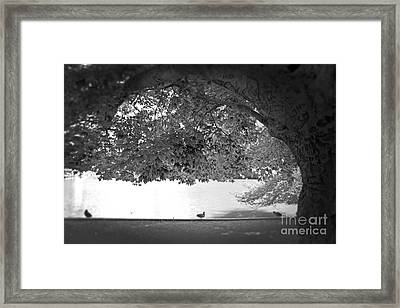The Tree At Mill Pond Framed Print