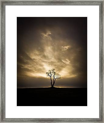 The Tree Framed Print by Benjamin Williamson