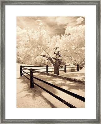 The Tree By The Fence Framed Print by Luke Moore
