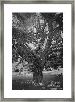 The Tree By The Lake Framed Print
