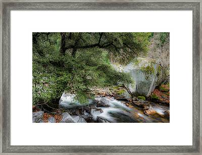 The Tree Framed Print