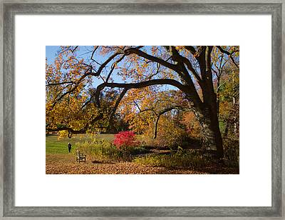 The Tree Embrace Framed Print