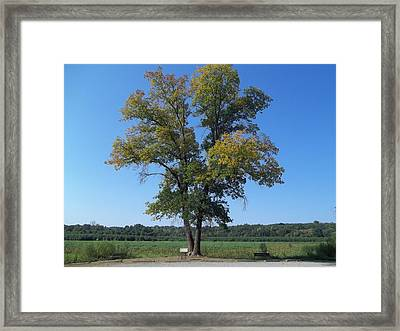 Framed Print featuring the photograph The Tree by Eric Switzer