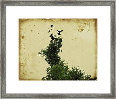 Crows Vying For Their Position In The Tree Framed Print